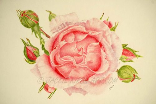 Abbi Rose Pastel & Pastel Pencil Size including Mount Approx 13.5 X 20 inches £95 plus delivery