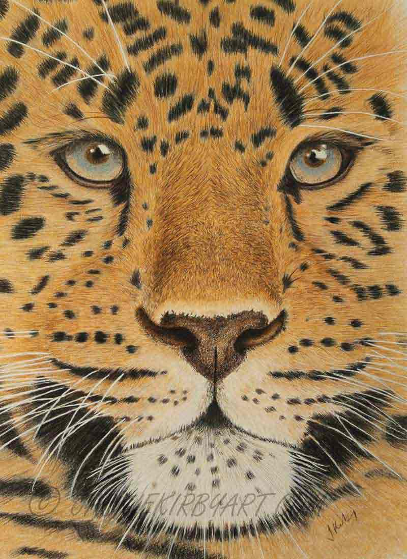 Amur Leopard Coloured Pencil