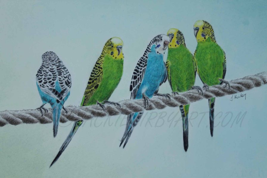 Budgie Buddies Coloured Pencil & Pastel Size Including Mount Approx 11.5 X16.5 inches £85 plus delivery