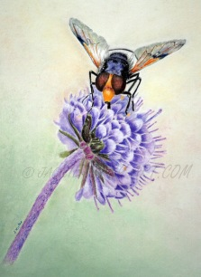 Mr Fly Pastel & Pastel Pencil Size to follow £95 plus delivery