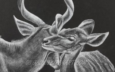 Coloured pencil - wildlife