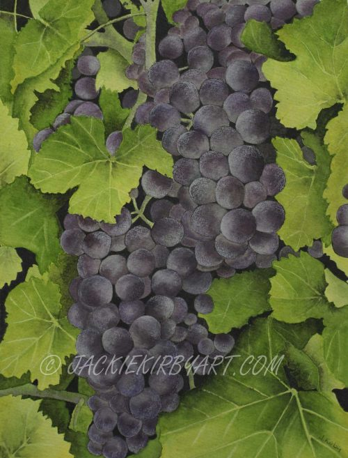 Watercolour grapes
